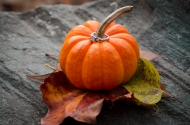 engagement ring on a pumpkin