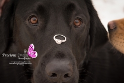dogs with engagement ring